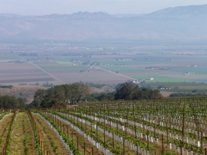 View of Salinas Valley from the Santa Lucia Highland vineyards