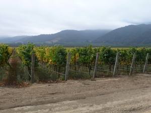 Santa Lucia Highland vineyards in the AM fog