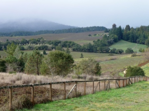 Beautiful Anderson Valley