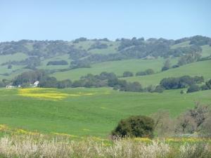 Sonoma fields